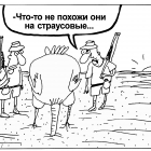 Страусовые яйца, Шилов Вячеслав