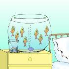 Виагра в аквариуме, Богорад Виктор