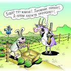 Заяц и капуста, Кийко Игорь