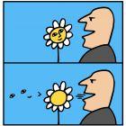цветок как лицо, Копельницкий Игорь