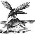 комар с рыбой, Гурский Аркадий