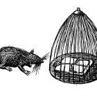 крыса перед клеткой, Гурский Аркадий