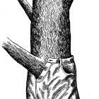 дерево в джинсах, Гурский Аркадий