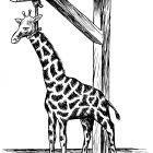 жираф, Гурский Аркадий
