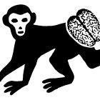 обезьяна, Копельницкий Игорь