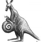 кенгуру с улиткой, Гурский Аркадий