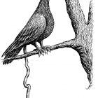 голубь с пастой, Гурский Аркадий