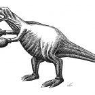 динозавр-боксёр, Гурский Аркадий