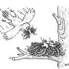гнездо из червей, Кононов Дмитрий