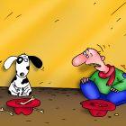 бедная собака, Соколов Сергей