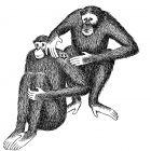 обезьяны и звезда, Гурский Аркадий