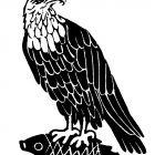 орел, Копельницкий Игорь