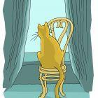 кот на стуле, Кононов Дмитрий
