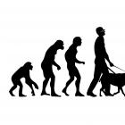 Эволюция и Год Собаки, Бондаренко Марина