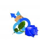 Голубая роза, Анчуков Иван