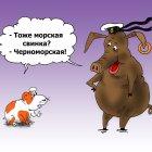Морские свинки, Тарасенко Валерий