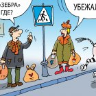 зебра, Кокарев Сергей