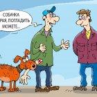 собачка, Кокарев Сергей