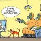 телепередача, Кокарев Сергей