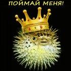 Золотая рыбка, Тарасенко Валерий