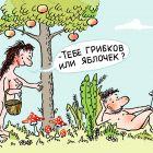"""""""Грибов или яблок?"""", Александров Василий"""